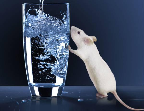 اثر آب روی موش