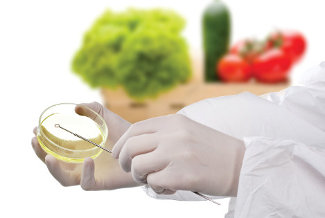 food microbiolofy
